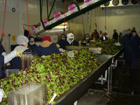 Food Safety Auditing, California