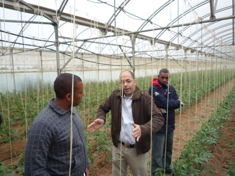 Greenhouse Production Training, Spain