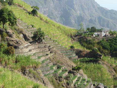 Horticultural Crops replacing Sugarcane, Cape Verde