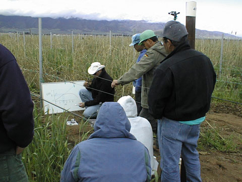 Irrigation Training, California