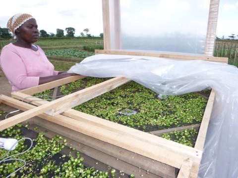 Post Harvest, Ghana